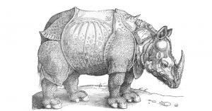 The Rhinoceros by Albrecht Dürer